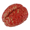 Bloody Brain Plastic Halloween Horror Haunted House Prop